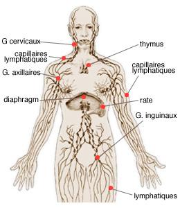 Infocancer Arcagy Gineco Localisations Cancers Du Sang H 233 Mopathies Maladie De