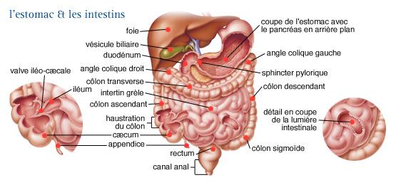 cancer système digestif