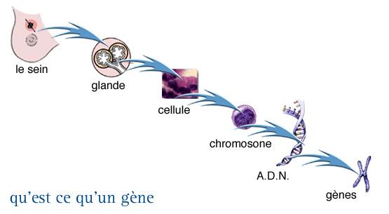 648b548ed3ce4e InfoCancer - ARCAGY - GINECO – Localisations – Cancers féminins ...