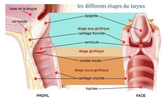 Les injections des dorsalgies