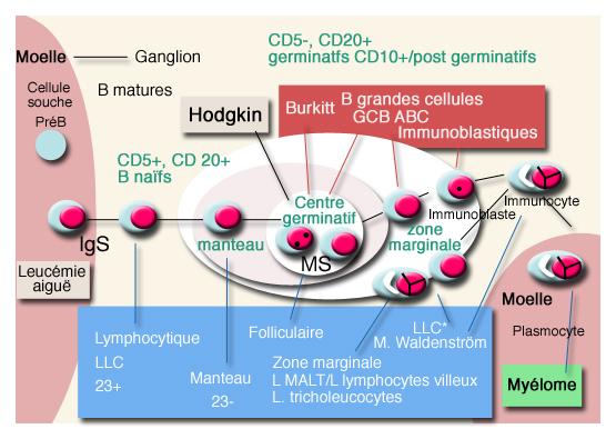 InfoCancer - ARCAGY - GINECO - Localisations - Cancers du sang ...