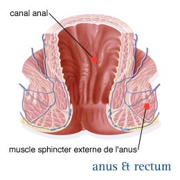 Photo du sphincter anal
