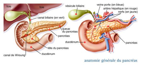cancer du corps du pancreas