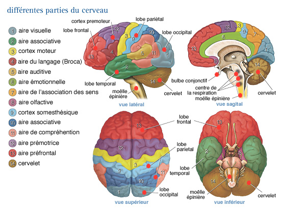cancer au cerveau symptomes