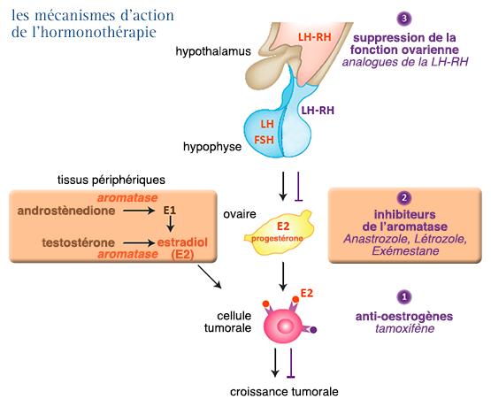 cancer origine hormonal complicaciones por oxiuros